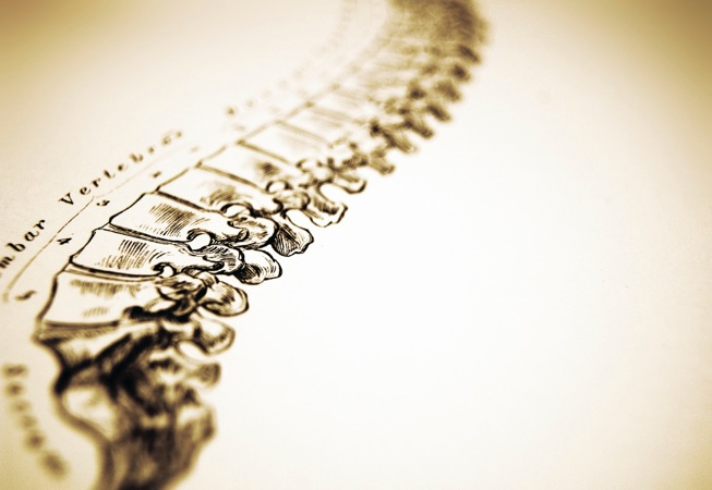 colonne_vertebrale
