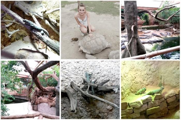 alligatorbay2