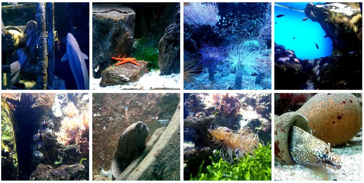 vacances 4 direction le grand aquarium de malo choup n
