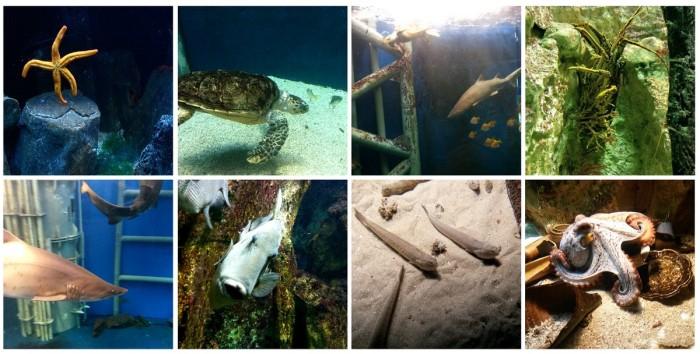 grand_aquarium_saint_malo_3