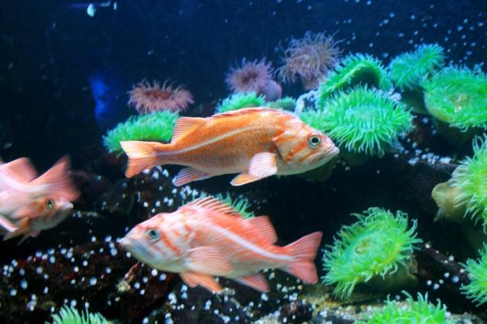 grand_aquarium_saint_malo_6