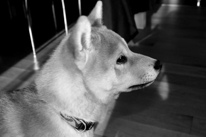 photo_fox_1.2
