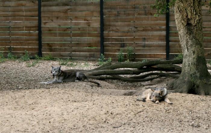 avis_zoo_labenne_aquitaine_08