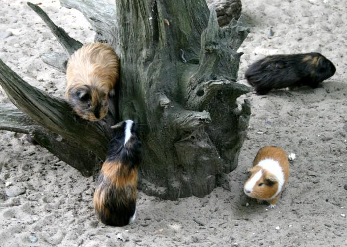 avis_zoo_labenne_aquitaine_26