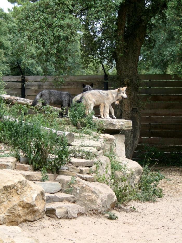 avis_zoo_labenne_aquitaine_30