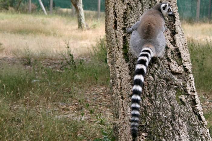 avis_zoo_labenne_aquitaine_33