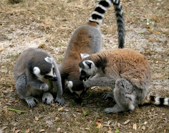 avis_zoo_labenne_aquitaine_41