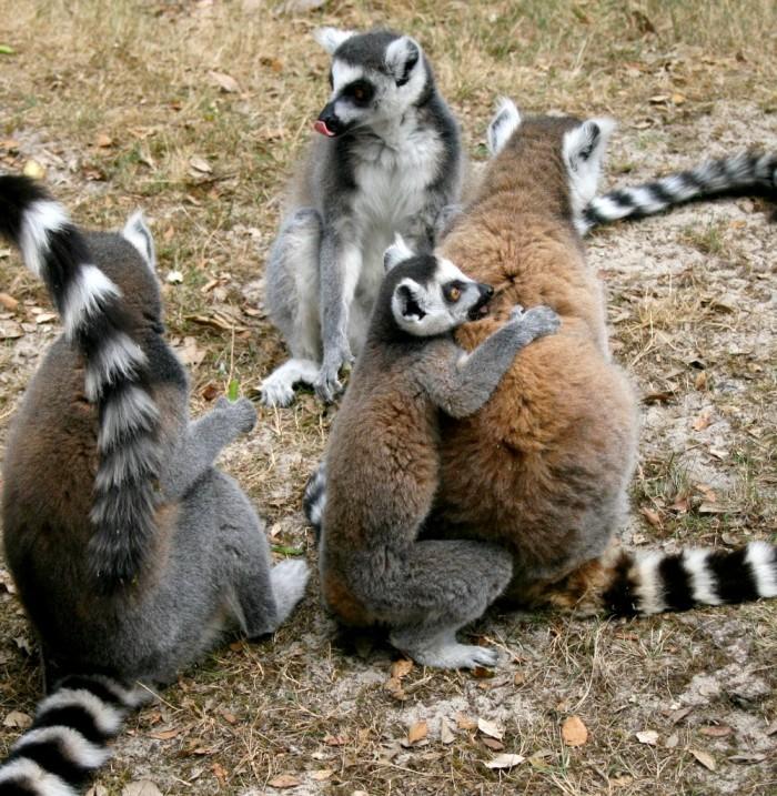 avis_zoo_labenne_aquitaine_42